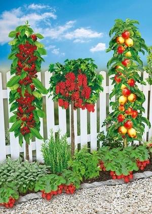 Mein schöner Garten Naschbeet pflanzfertig, 10 Pflanzen