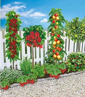 Mein schöner Garten Naschbeet pflanzfertig, 18 Pflanzen