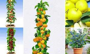 Mein schöner Garten Obst-Kollektion Balkon & Terrasse, 6 Pflanzen