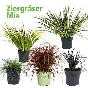 Mein schöner Garten Ziergräser-Mix 5er-Set