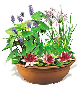 Mini-Teich, 1 rosa Schwertlilie , 1 bl. Hechtkraut, Erde, Kies& Dünger