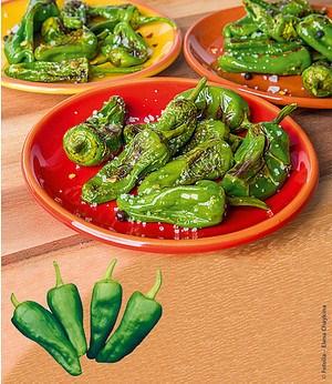 """Paprika """"Poxigo"""" F1,1 Pflanze"""