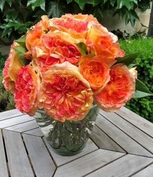 "Parfum-Rose ""Henri Delbard®"",1 Pflanze"