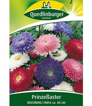 Quedlinburger Riesen-Prinzess-Astern-Mix,1 Portion