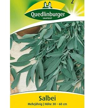 Quedlinburger Salbei mehrjährig,1 Portion