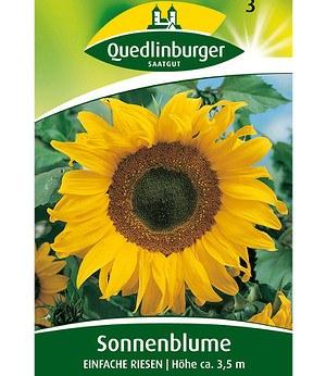 """Quedlinburger Sonnenblume """"Einfache Riesen"""",1 Portion"""