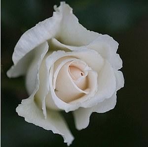 Rose Kristall