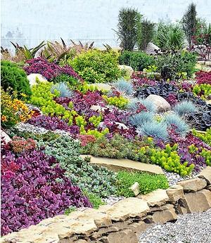 "Stauden-Kollektion ""Rock Garden"",6 Pflanzen"