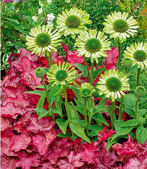 """Stauden-Mix """"Green & Red Light"""",2 Pflanzen"""