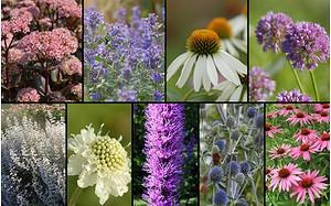 """Staudenbeet """"Fest für Bienen und Schmetterlinge"""" zum Nachpflanzen"""
