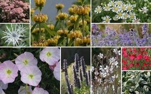 """Staudenbeet """"Genügsame Schönheiten"""" zum Nachpflanzen, 10 Pflanzen"""