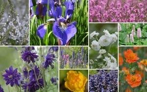 """Staudenbeet """"Wiese im Beet"""" zum Nachpflanzen, 12 Pflanzen"""
