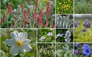 Staudenschätze Halbschatten, 14 Pflanzen