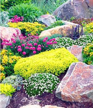 """Steingarten-Mix """"Happy Flowers"""",4 Pflanzen"""