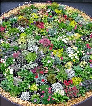 Mein Schoner Garten Bodendecker Thymian Set 9 Pflanzen Gunstig