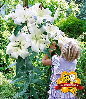 "Tree-Lily® ""Pretty Woman"",3 Stück"