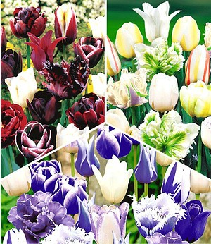 "Tulpen-Mix-Kollektion ""Perfect Partners®"",30 Zwiebeln"