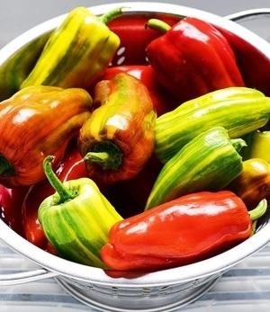 Veredelte gestreifte Paprika Candy Cane F1,2 Pflanzen