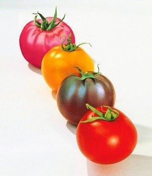 Veredelte runde Tomaten-Raritäten,4 Pflanzen