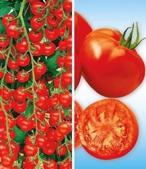 Veredelte Tomaten-Kollektion La sélection du Chef®,4 Pflanzen