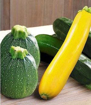 Veredelte Zucchini-Kollektion,3 Pflanzen Cucurbita Gemüsepflanzen