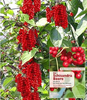 """Vitafit-Beere® - Schisandra chinensis und Buch """"Die Schisandra Beere"""""""