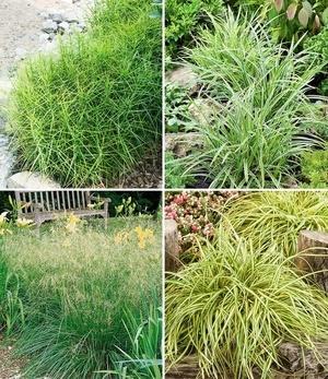 Winterhartes Gräserbeet für schattige Standorte,12 Pflanzen