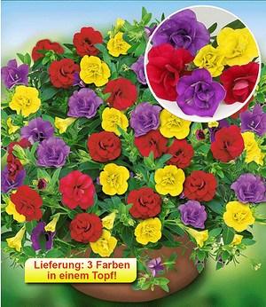 "Zauberglöckchen Trixi® ""Hot Petticoat"",6 Pflanzen, 3 in einem Topf"