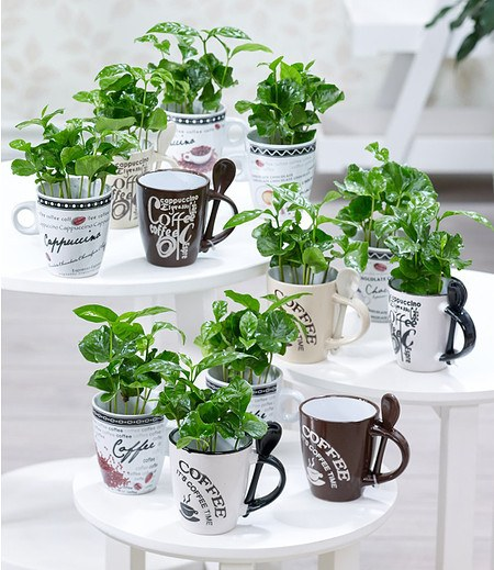 3er-Set Coffea Arabica mit Kafsse; 3er-Set