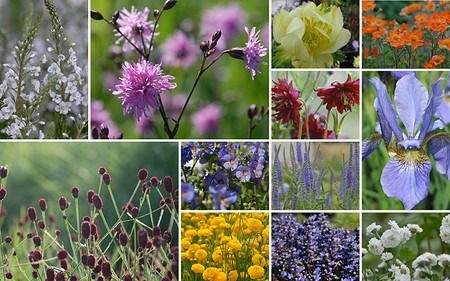 AllgäuStauden 12er-Kollektion Poetische Blumenwiese f. gute, frische Gartenböden