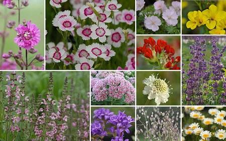 AllgäuStauden 12er Kollektion Poetische Blumenwiese f. mager-trockene Standorte