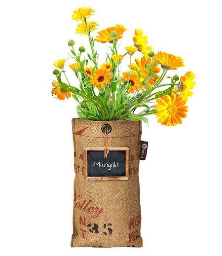 "Baza Seeds Mini-Garten BIO-Calendula ""Essbare Blume"",1 Komplett-Set"