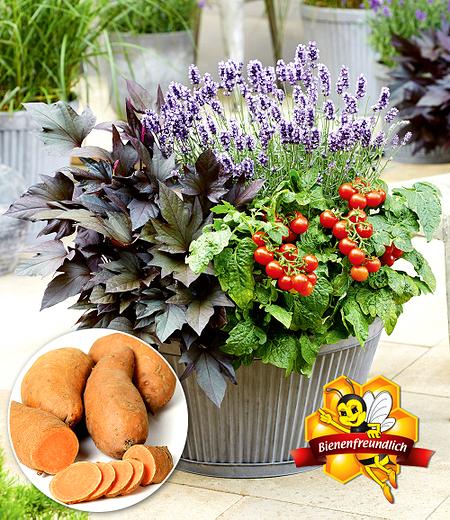 Bienenfreundliches Naschkörbchen,3 Pflanzen