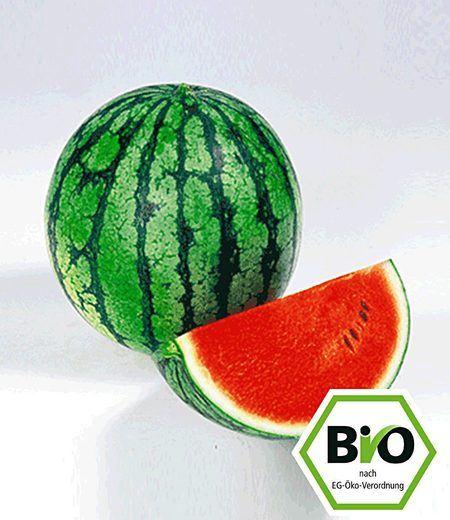 BIO-Melone 'Ingrid' F1,2 Pflanzen Wassermelone BIO Melonenpflanze