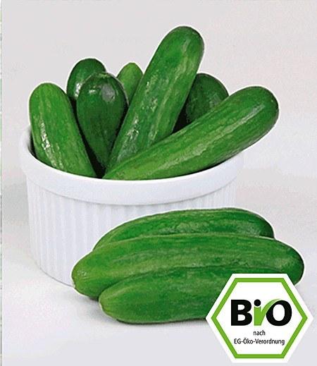 BIO-Snackgurke 'Rocky' F1,2 Pflanzen BIO Gurkenpflanze