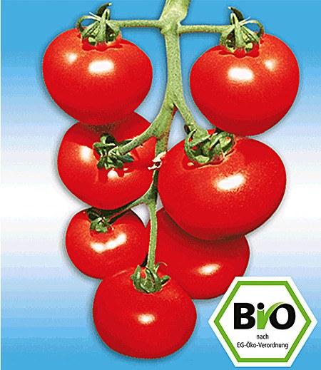 BIO-Stabtomate 'Previa' F1,2 Pflanzen BIO-Tomatenpflanze