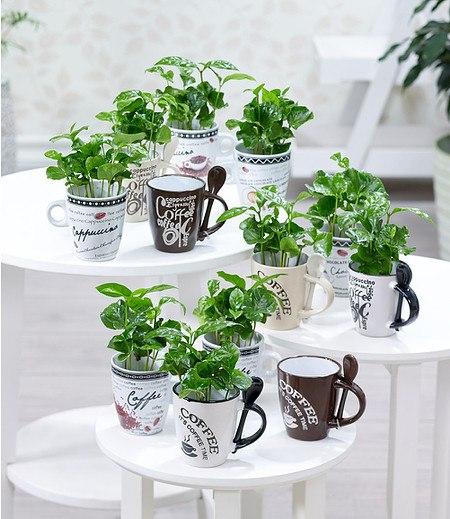 Coffea Arabica mit Kaffeetasse; 1 Set