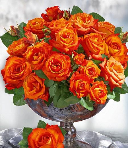 "Delbard Parfum-Rose ""France Libre®"",1 Pflanze"