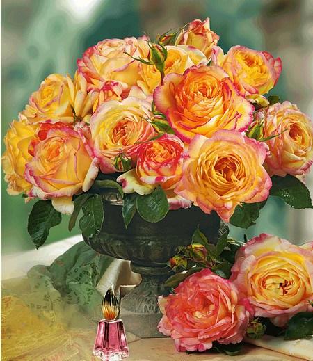 "Delbard Parfum-Rose ""Mitsouko®"",1 Pflanze"