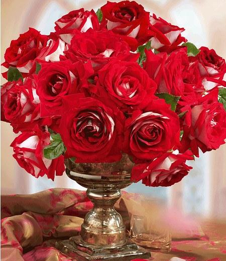 """Delbard Rose der Liebe """"Château de Versailles®"""",1 Pflanze"""