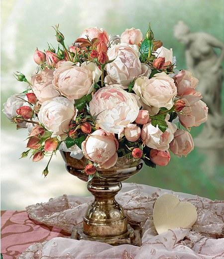 """Delbard Rose der Liebe """"Madame Figaro®"""",1 Pflanze"""