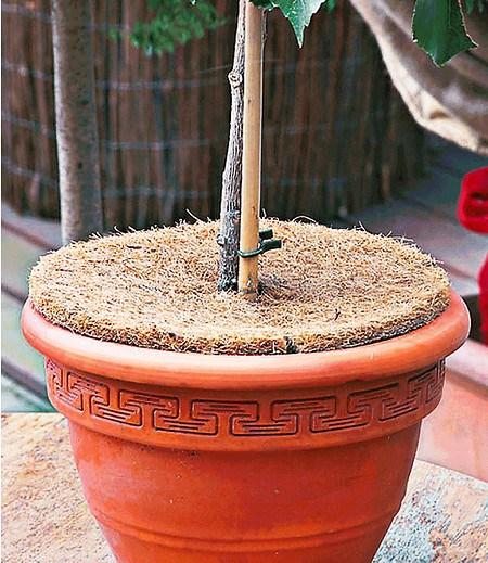 Dinies Deko & Gartenartikel Kokos-Abdeckscheiben 37 cm,2 Stück