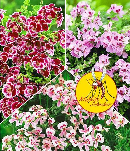 Ziergarten: Gartentipps Im Mai - Mein Schöner Garten Garten Januar Was Ziergarten Tun