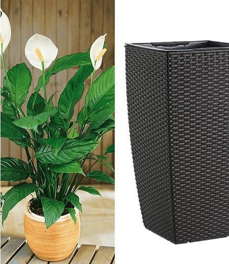 """Einblatt (Spathiphyllum) & EMSA CASA MESH Säule 57 cm hoch """"granit"""""""