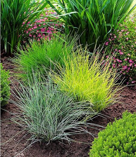 Gräser Für Garten gräser trio 3 pflanzen günstig kaufen mein schöner garten shop