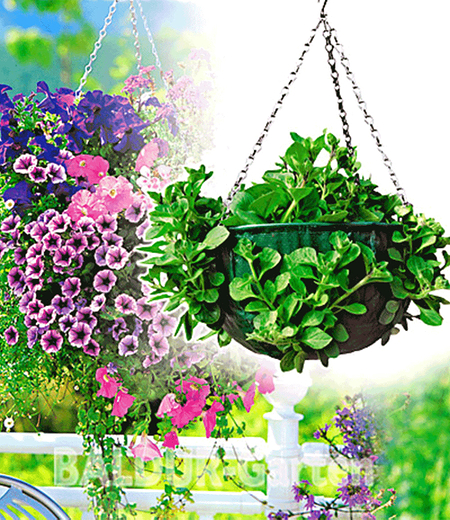 Hanging-Basket,1 Stück