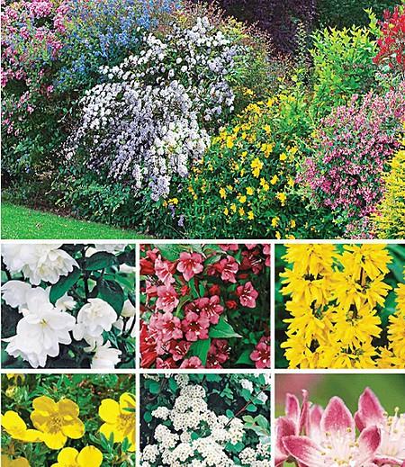 Hecken-Kollektion,11 Pflanzen