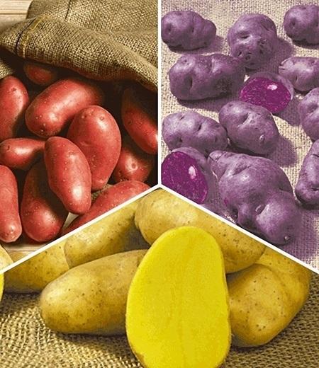Kartoffel-Raritäten-Kollektion,2x2,5 kg + 25 Knollen