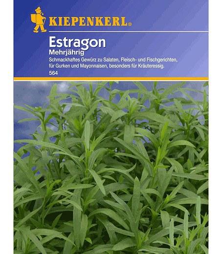 Kiepenkerl Estragon mehrjährig,1 Portion