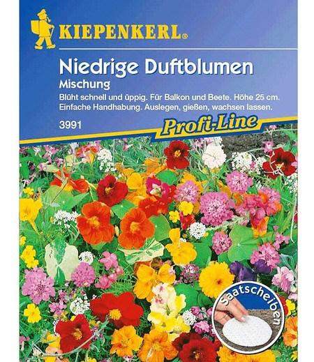 Kiepenkerl Niedriger Duftblumen-Mix Saatscheiben,5 Stück